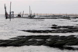 les huitres du banc d'arguin de marc druard