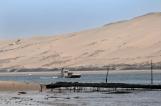 Brassées par les courants et fixées sur un sol sableux, l'huitre papillon révèle la pureté propre aux eaux qui la voient grandir