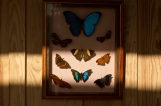 Planche Papillon