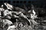 L'ostréiculture, la Passion d'un savoir-faire
