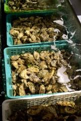 Nos Huîtres vous attendent en vivier d'eau de mer réfrigérée